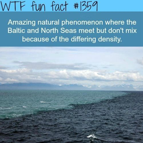 Fun facts, Weird fact, random fact, facts. Baltic and North Sea don't mix because of different densities.