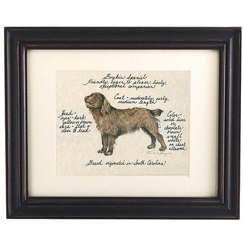 Boykin Spaniel Dog Print