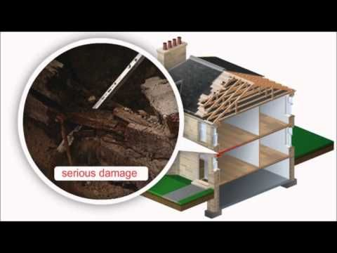 This video from Wise Property Care looks at dry rot, one of the most damaging conditions you can get in your home. The video explains what dry rot is, the damage it can cause and the treatments available. Find out more about dry rot at http://www.wisepropertycare.com/dry-rot/ #dryrot #property #propertyrepair #homeimprovement #diy #home #realestate #timber #damp