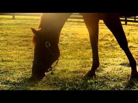 1000 Images About Equine Assisted Therapies On Pinterest