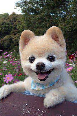 Cute Dog :D