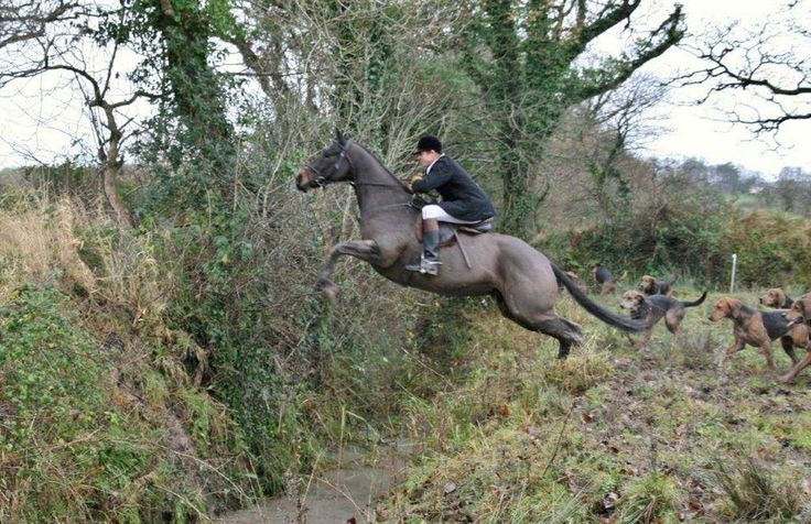 Ditch Jumping While Foxhunting Super Horses Horse