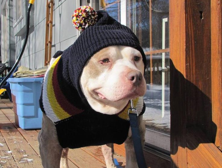 """Fospice"" Gives Terminally Ill Shelter Dogs Chance at a Happy Ending  Second-Chance-Animal-Rescue-submitted-dog-in-hat"