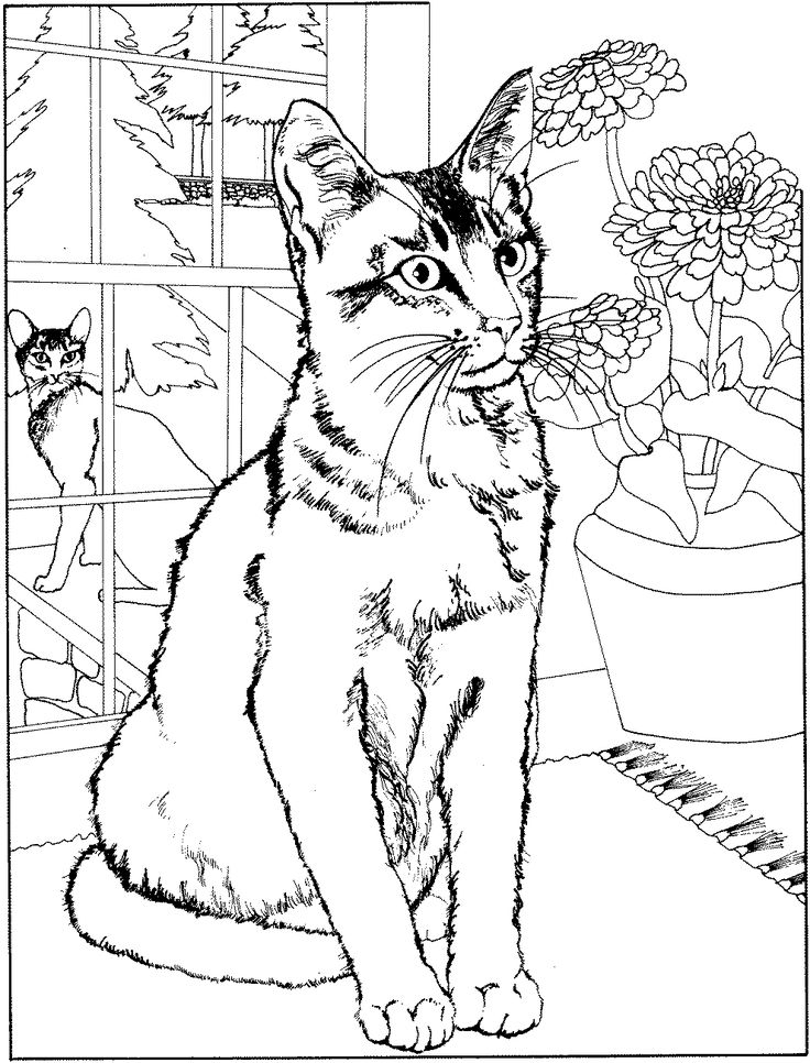 47 best coloring pages cats images on Pinterest | Drawings, Cats ...
