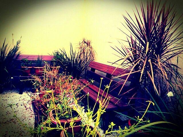 Meu Pequeno Jardim em Palmas/TO - Brasil. -  My little garden em Palmas/TO - Brazil