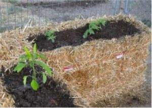 gardening with straw bales