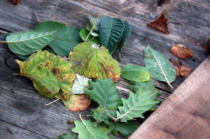 impression feuilles