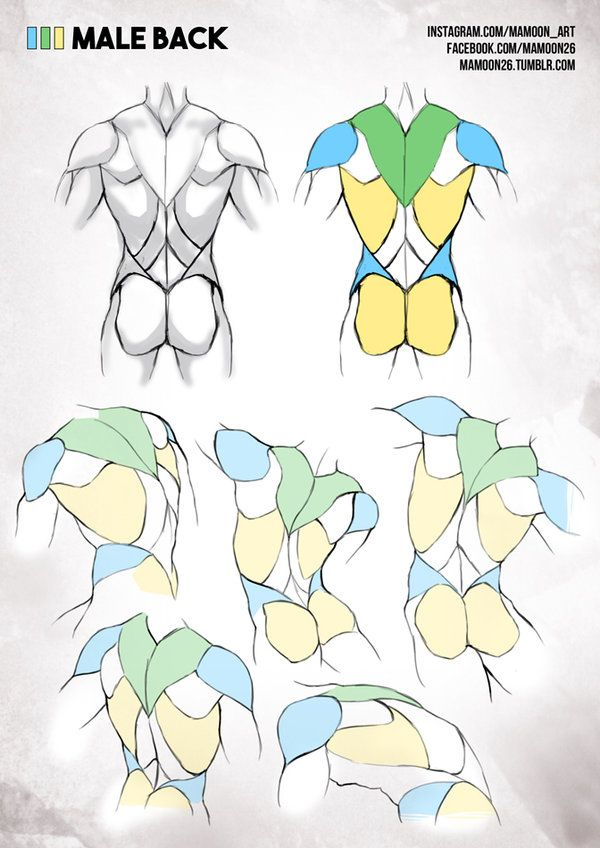simplified anatomy 02 - male back by mamoonart.deviantart.com on @DeviantArt