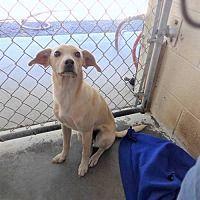 Shelburne, Vermont - Terrier (Unknown Type, Medium). Meet Barley, a for adoption. https://www.adoptapet.com/pet/20351153-shelburne-vermont-terrier-unknown-type-medium-mix