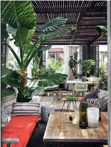 Perfect Sitting Room filled with Large Tropical Plants | ambiance, ambiance tropicale, décoration, décoration tropicale, tropiques