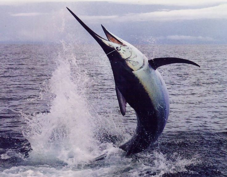 Sport Fishing Cartagena Colombia, Tourism, http://yook3.com , Wilfried Ellmer