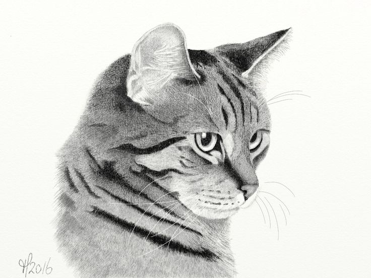 Kitty Cat. Digital drawing. Graphite app for iOS.