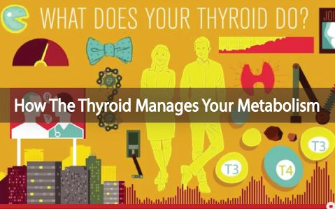 Do you KNOW how important your thyroid gland is in the functioning of your body? It may seem small, but its function is not. START HERE by