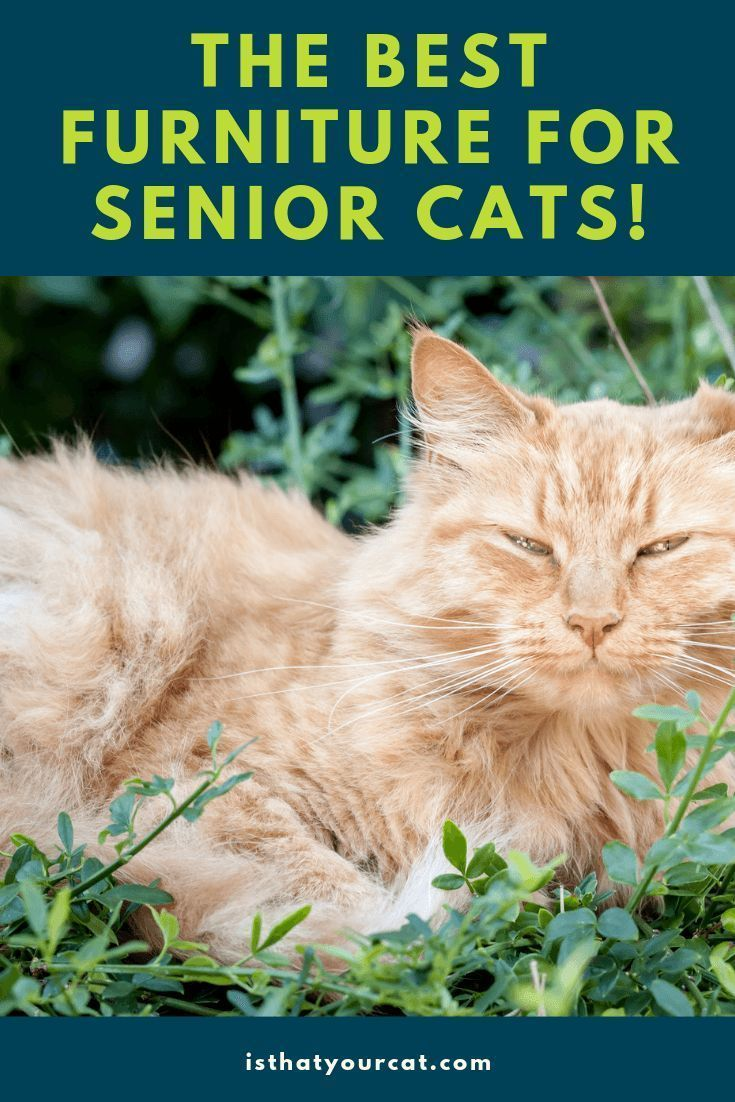 What Is The Best Cat Furniture For Senior Cats In 2020 Senior Cat Cats Best Interactive Cat Toys