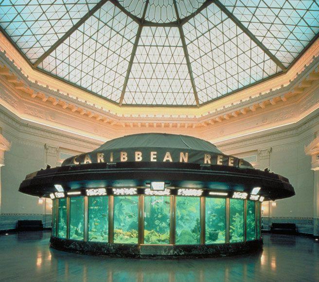 15 Must See Aquarium Architecture Pins Aquarium Design