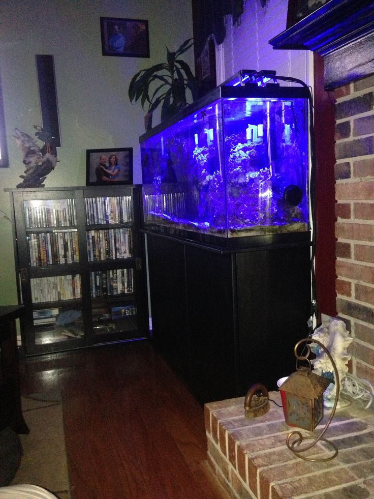 My 55 gallon  saltwater fish tank