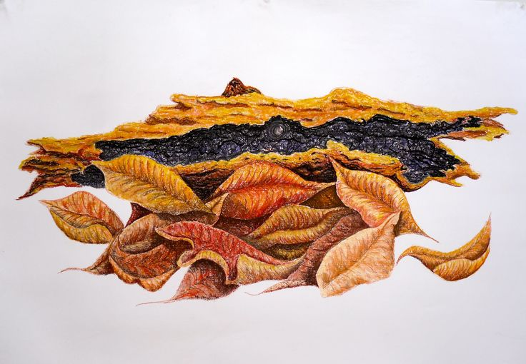 Art work in Pastel. Autumn leaves, my first pastel work five days after starting drawing. Artwork done by Marilyn Theisel