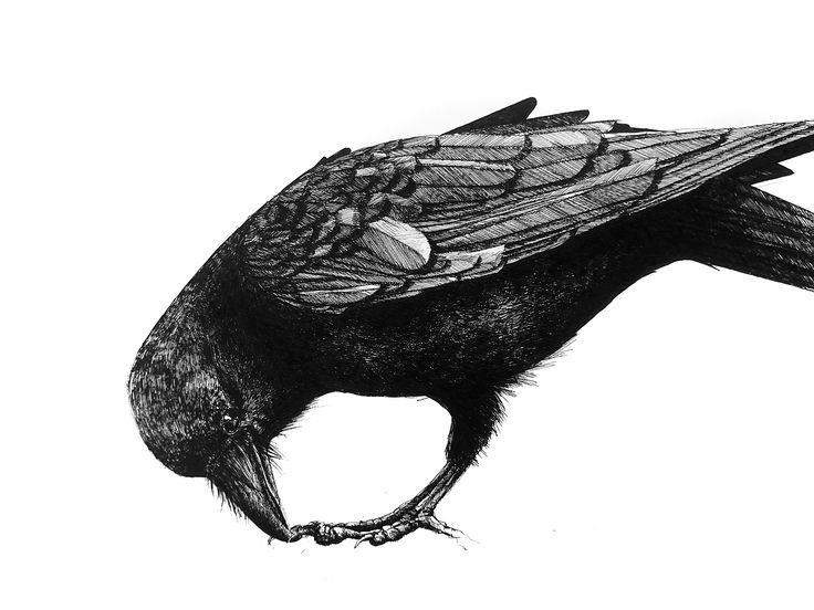 Picking raven - ORIGINAL - 110€ Illustration by Ariane Relander