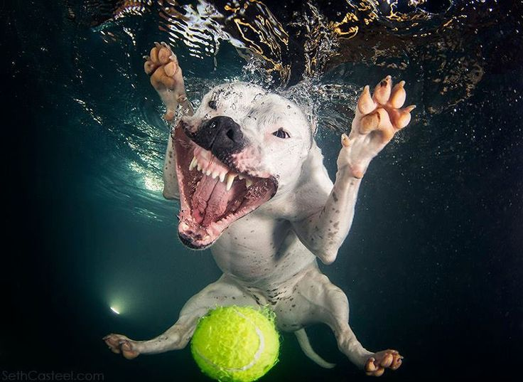 Big Teeth and Adorable Underwater Dog