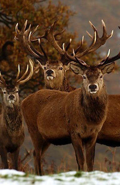 """Handsome Male Deer: """"The Gang's all here for The 'Stag' Party!"""""""