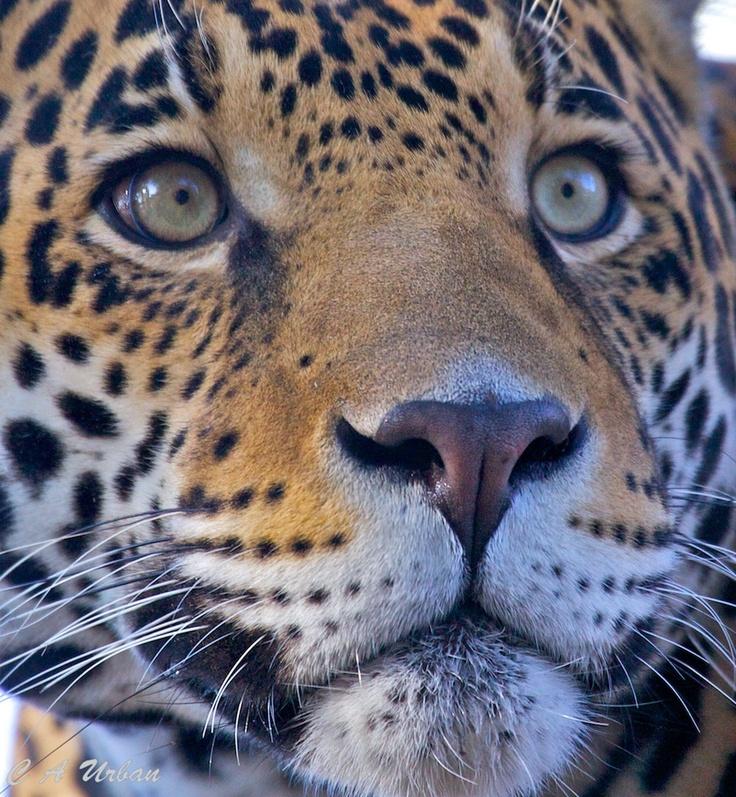 111 Best Az Phoenix Zoo Images On Pinterest Phoenix