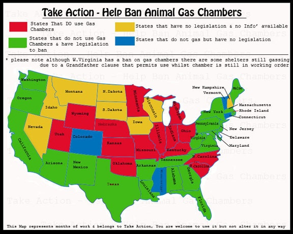 time take action against animal abuse Against animal abuse: a genre  the two genres used for this analysis are an online poster against animal cruelty and  prompting them to take action against this.