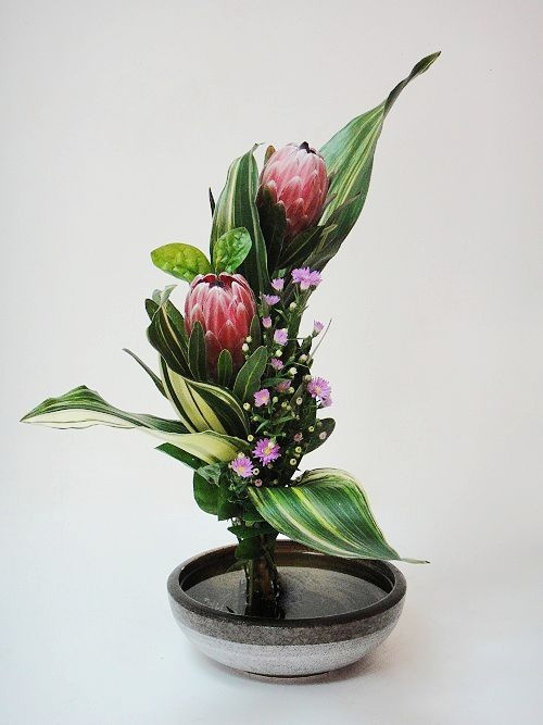 Protea ikebana pinterest beautiful flower and