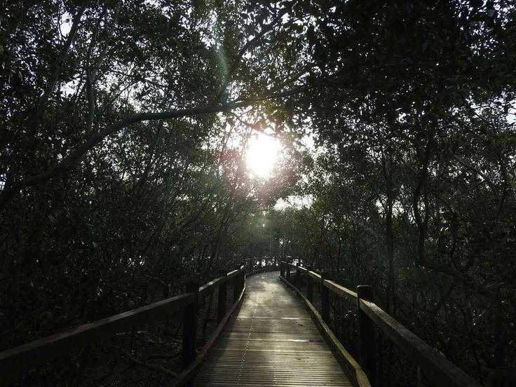 Mangrove Boardwalk, Nudgee