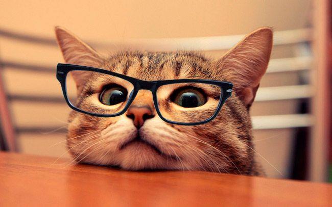 pessoas-oculos-entendem-1