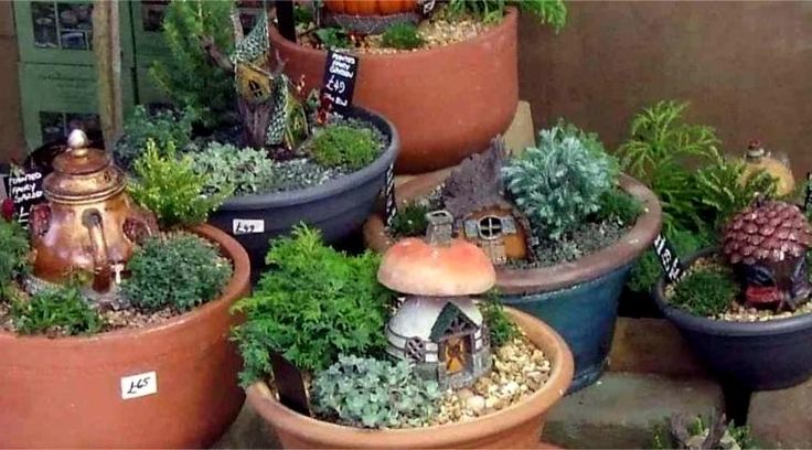 Miniature fairy garden display project new hopetoun garden it 39 s a fairy 39 s world - Fairy garden containers for sale ...
