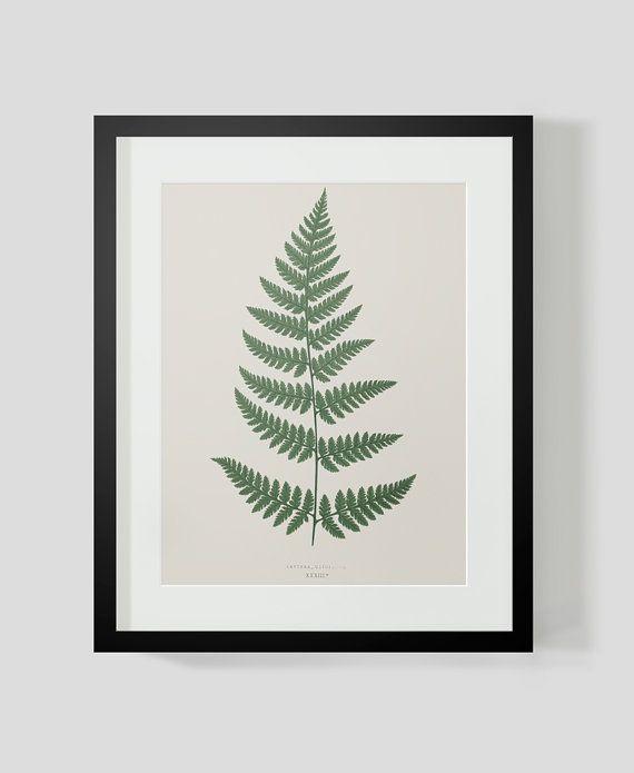 Fern+Print+Plate+6+by+michaelellisstudios+on+Etsy