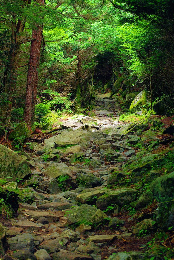 Great Smoky Mountains National Park hiking trail in North Carolina.