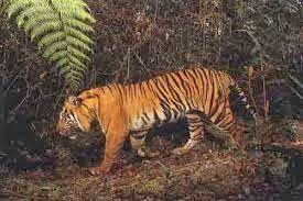 Ketika kita berjalan menembus hutan Sumatera, kita bisa menelusurinya dengan berjalan kaki. Perjalanan menelusuri hutan liar dan berlumpur, sambil mengamati sekilas satwa liar.