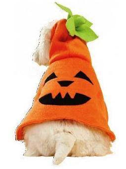 Este divertido disfraz de calabaza Jack O Lantern para perros, es ideal para halloween y es muy sencillo de confeccionar. Pasos a seguir: Primero coser la costura central de la capucha que va en dos piezas. A continuación coser la capucha con la capa. A parte, montar las hojas con el tronco verde y luego …