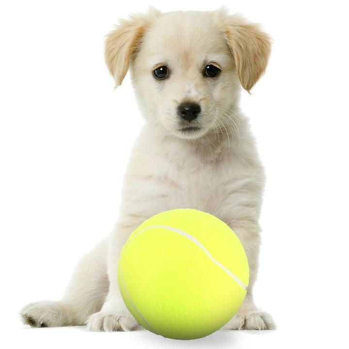 Large Dog Tennis Ball Pet Toys 6 Hop Dog Ball Outdoor Dog Toys Sporting Dogs