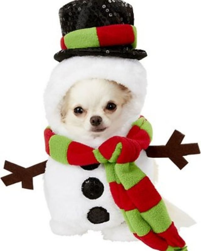 Christmas Pet Costumes.11 Best Christmas Dog Outfits Dogleash Christmas Dog Pet