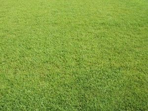 A Centipede lawn is not your typical lawn. Using the same lawn care products designed for all other turfs can harm the Centipede Turf!  Centipede Grass needs a low-nitrogen, fertiliz…