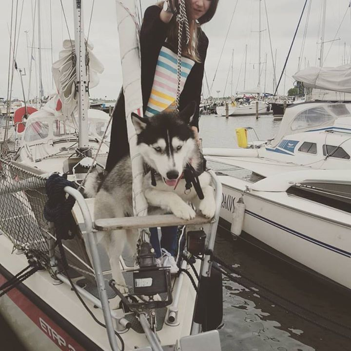 """Follow us! www.frarina.com #wildlife #wolf #sheep #wildlifephotography #dog #husky #sail #sailingboat #sailing #girl #beautiful Hello there! I am Frank Cozzolino and with my beautiful girlfriend Marina we love to sail vlogging and documentary making. Together we founded our Youtube channel """"FRARINA"""" which is all about sport and outdoors activities and travel documentaries. Whereas FrancisCozzolino is my personal Youtube channel where I will post our vlogs. =======Youtube…"""