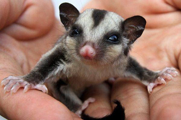 Foto Hewan-hewan Langka di Indonesia   Gambar Hewan-hewan Langka di Indonesia - Yahoo! News Indonesia