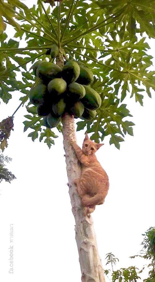 Ja! ... gato busca cocos ???                                                                                                                                                                                 More