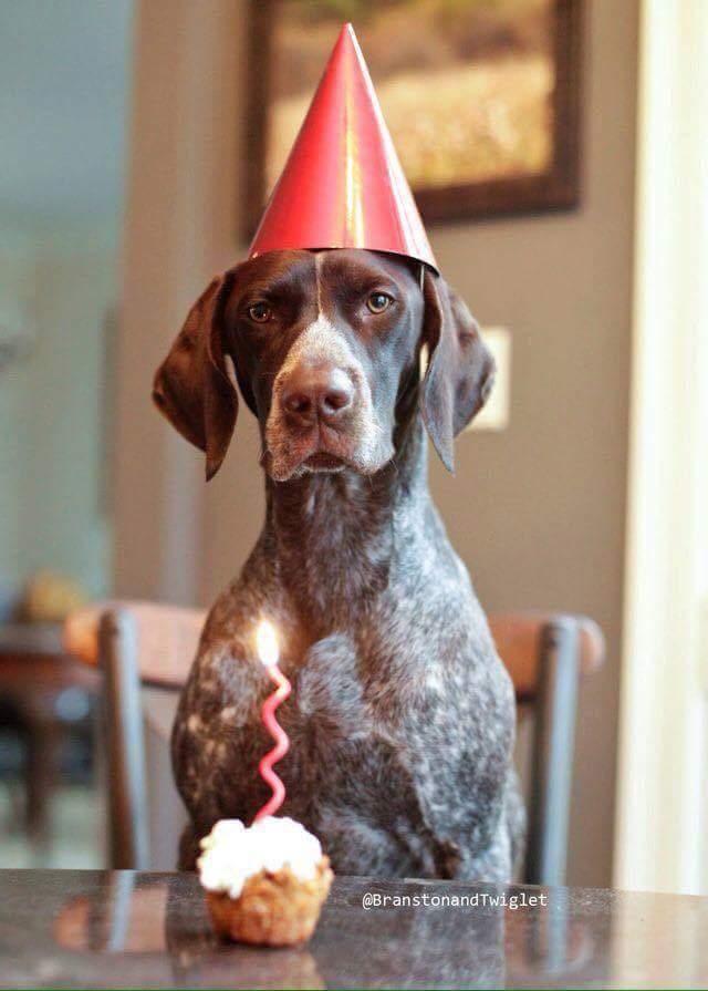 Best 25 Birthday Wishes Images On Pinterest Birthdays