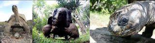 Zoo Jobs: THE MAURITIAN WILDLIFE FOUNDATION - TORTOISE PROJE...