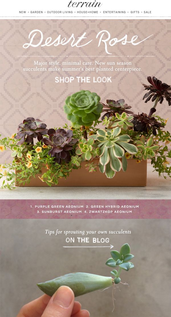 New Garden Ideas 2015 54 best succulents images on pinterest   gardening, plants and flowers