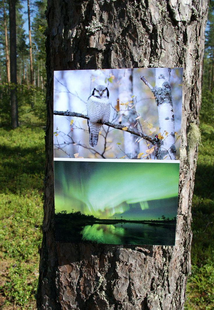 Finnature, esite takaa. Suunnittelu: Heidi Sarjanoja/Valokki Design.