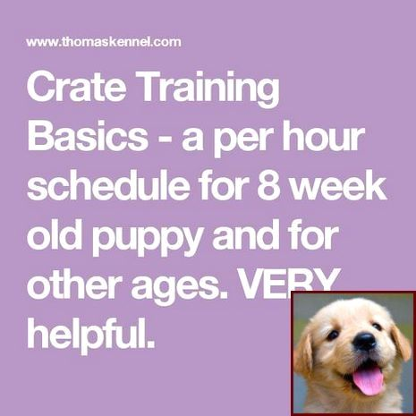 1 Have Dog Behavior Problems Learn About House Training A Bichon
