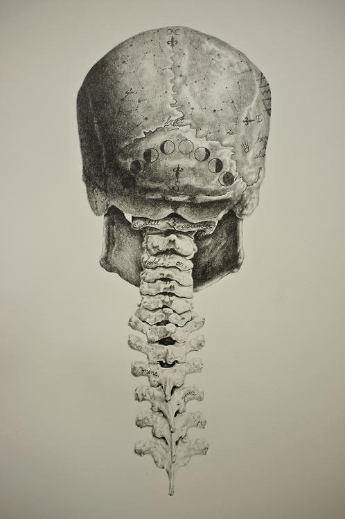 Skull n spine.