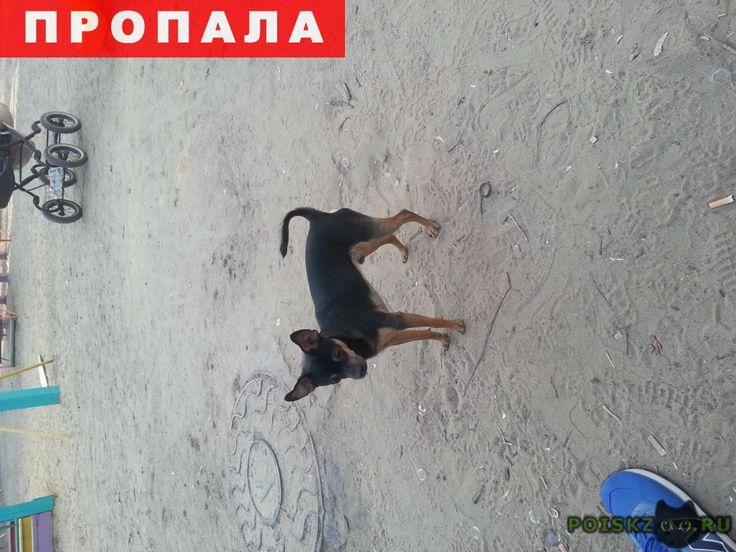 Пропала собака кобель в люберцах.русский той терьер г.Люберцы http://poiskzoo.ru/board/read32090.html  POISKZOO.RU/32090 Пропала собака в районе Высшая школа, породы Русский той терьер зовут Гриша. Был без ошейника, окрас черный с коричневым подпалом.   РЕПОСТ! @POISKZOO2 #POISKZOO.RU #Пропала #собака #Пропала_собака #ПропалаСобака #Люберцы