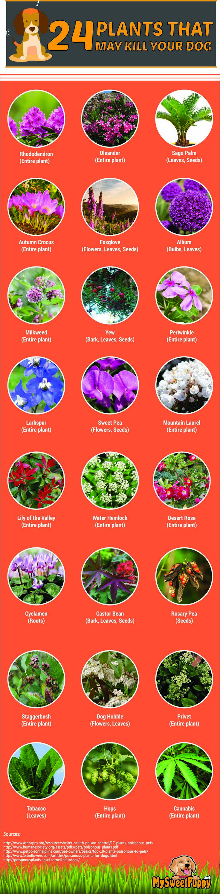 Please watch your furry friends around these plants, they could be seriously hurt or worse!