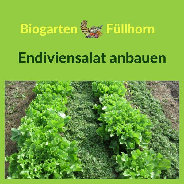 Anbautipps Fur Endivien Biogarten Fullhorn Biogarten Garten Gemusegarten Anlegen