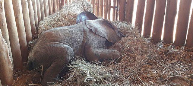 Olifantje Kasewe werd gevonden toen ze alleen rondzwierf. Haar moeder was gedood en alleen zou ze nooit overleven in het wild. Ze is opgevangen in het Olifantenweeshuis in Zambia, waar ze medische zorg en voedzame melk krijgt. Ze zal alle vaardigheden leren die ze nodig heeft om in het wild te overleven. Als ze groot en sterk is, zal ze worden uitgezet, maar zo ver is het nog lang niet. Help jij weesolifantje Kasewe veilig en gezond op te groeien?